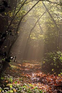 Breaking Through from Garry Jenkins Source: flickr.com