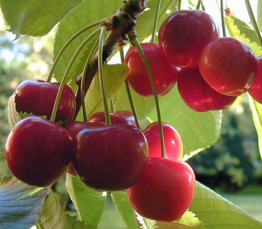 February is National Cherry Month.