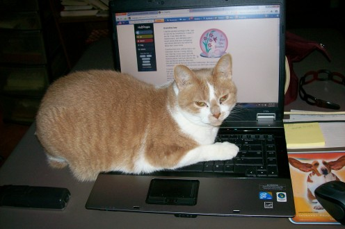 See, even Punkin adds to my HubPage reading delay!