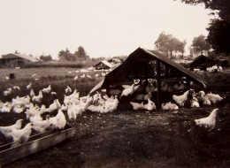 Rain shelter with chickens, big shelter in upper left. I took this picture with my first Brownie.