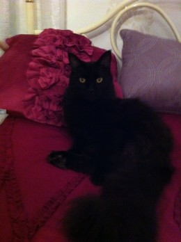 My cat Tuni