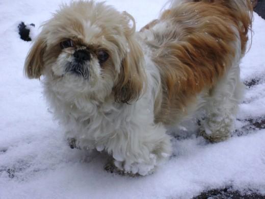 The dog - Clancey