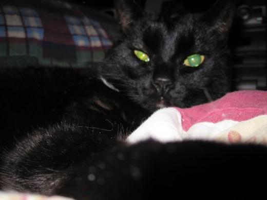 Suspicious Cat is suspicious of you.