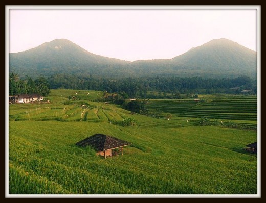 Jatiluwih Rice Terrace with mount at the background.