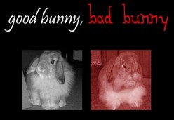 Good Bunny, Bad Bunny: How To Handle A Bunny 101