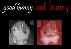 Good Bunny, Bad Bunny: How To Handle A Bunny 101