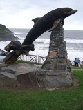 A Holiday in Wales; Cardigan Bay, New Quay, Aberaeron, Llangrannog and  Spotting Dolphins