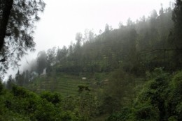 It's so familiar to me, i felt the view is just like our Cameron Highland.