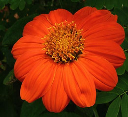 Summer Bloom- Quinta Flower 15  from PelicanPete  Source: flickr.com