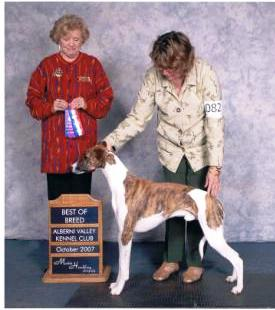 Rupert won Best Puppy in Hounds Breed at one year old