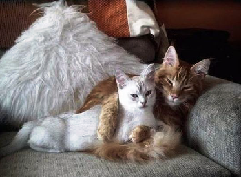 Cuddle up and watch a movie together