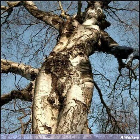 The tree woman