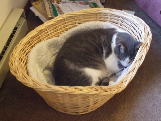 Sammy in his original basket bed.  He warms our hearts.
