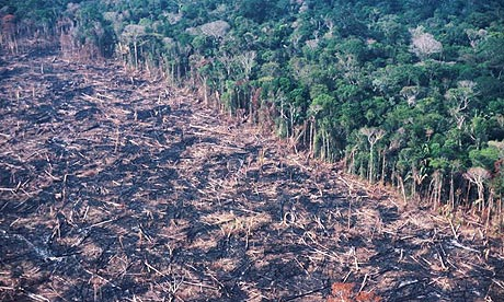 Rainforests being cut down. :(