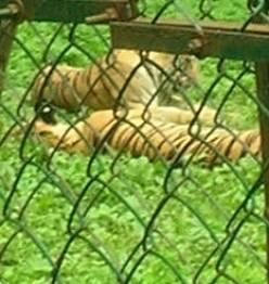 Sanjay Gandhi National Park, Borivali, Mumbai; Animal life and monuments