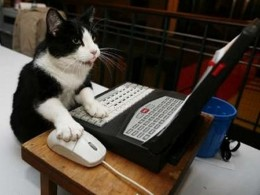 Tom often thought it was ironic that he always had a mouse on hand and yet stayed hungry.