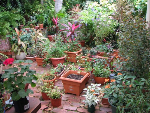 I Use To Take Much Care About My Garden Also Even Before The Monsoon  Arrive. This Is Just To Supplement The Adequate Necessities During The  Monsoon.