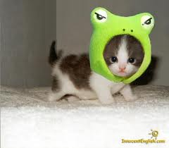 CATS ARE WEARING THEM.