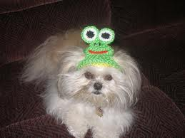 MY SISTER'S DOG LULU-BELL IS WEARING ONE, AND SUDDENLY ACTING LIKE  A FROG PRINCESS!