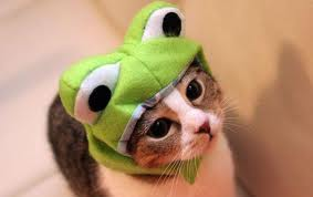 WHAT???? NOW MY OWN CAT MR. JEEPERS IS WEARING ONE???????????????
