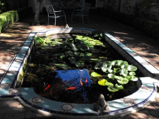 The gazing pool at the Camillia Inn