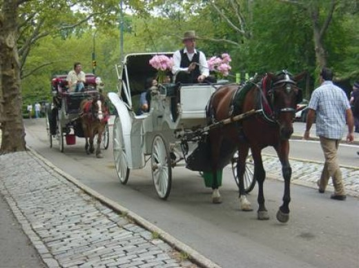 Horse-Drawn Carriage Ride in Central Park