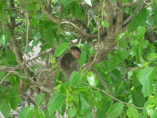 Aww baby monkey in the trees