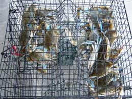 "This is an example of a ""crab pot"" or crab trap that you set and come back later to harvest your catch!!!"