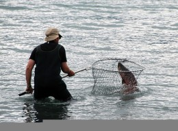 Man Catches Salmon