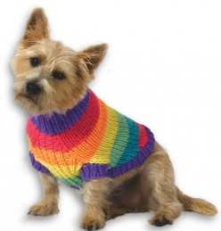 Dogs in a Sweater! Seriously?
