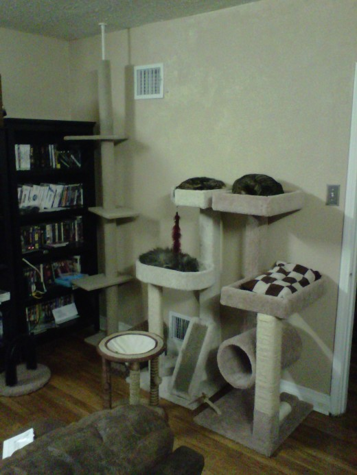 "We only had the tall cat ladder and one cat tree before getting the new guys.  In our ""fun room"" we now have all sorts of places for the kids to play and sleep."