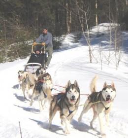 Ken mushing his sled at Peacepups