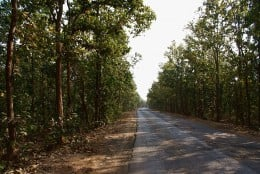The road to Joydev-Kenduli from Durgapur