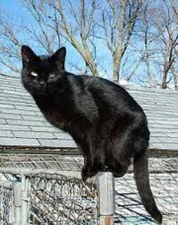 """Nice Kitty Cat...please stand still!"""