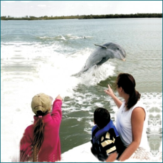 On an eco-tour with Captain Mike Bailey, you can enjoy the antics of dolphins and manatees.