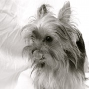 santos88 profile image