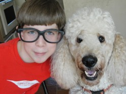 Standard Poodle Care and Grooming