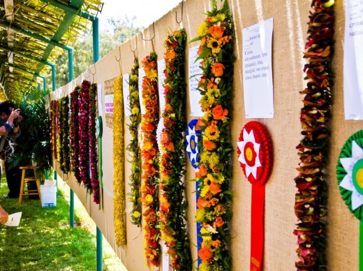 May Day (Lei Day) May 1st: Traditional Leis are shown on display for public viewing after being awarded various ribbon awards