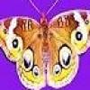 Erica Silverlight profile image