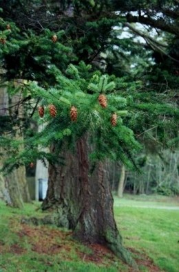 Trees, like this pine tree, grow wider each year, speeding the growth in the warmer months, and slowing growth down in the colder months.