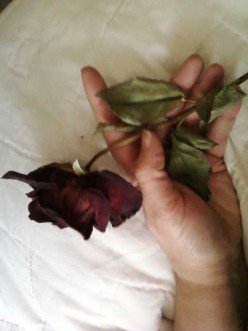 The Rose Within My Hand