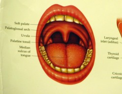 What Does the Uvula Do?