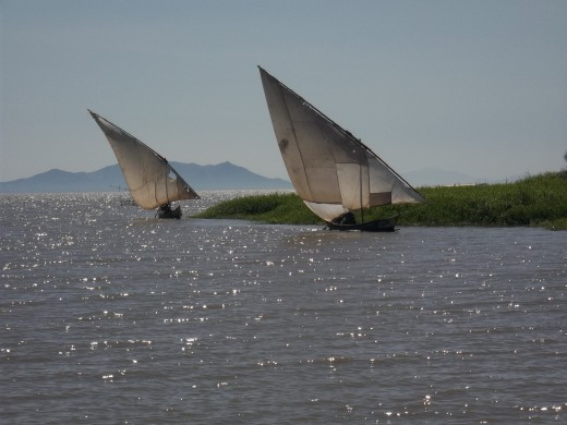 Sail boats returning from a fishing expedition at Dunga point