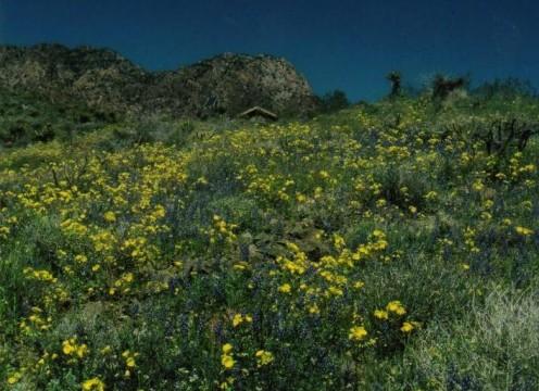Providence Mountains, Mojave Desert, CA.