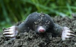 24 Hours In The Life Of A Mole - A Poem By Poshcoffeeco