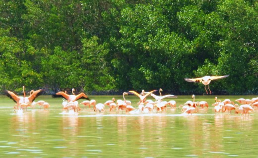 Celestun is a famous nesting area for flamingoes.