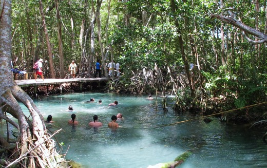 Students swimming in Mangrove waters near Celestun, which is a popular day trip from Merida.