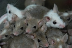 How to Get Rid of Mice Without Calling an Exterminator
