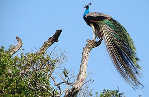 A beautiful sight at Wasgamuwa National Park.