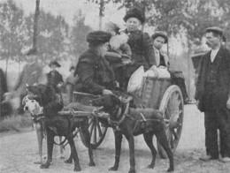 Belgian refugees